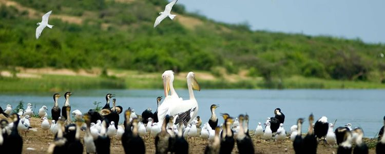 Uganda Birding safaris in Lake Bunyonyi
