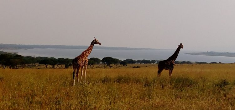 1 Day Uganda Wildlife Safari Murchison Falls National Park Uganda / 1 Day Murchison Falls Safari in Uganda with Birding- Uganda Safari News