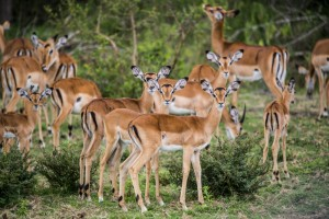 1 Day Mburo Wildlife Safari Uganda Tour / 1 Day Uganda Wildlife Safari In Lake Mburo National Park-Uganda Safari News